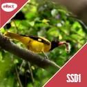 Gazduire Web Linux SSD1