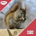 Gazduire Web Linux SSD2