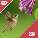 Gazduire Web Linux SSD4