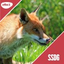 Gazduire Web Linux SSD6
