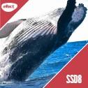 Gazduire Web Linux SSD8
