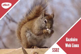 Gazduire web Linux SSD2 - efectRO