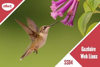 Gazduire web Linux SSD4 - efectRO