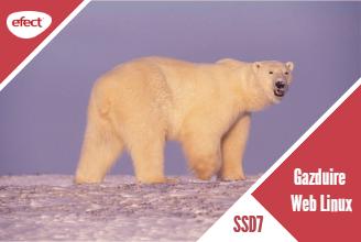 Gazduire web Linux SSD7 - efectRO